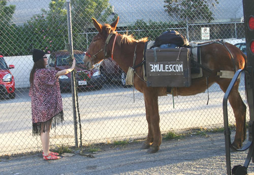 Two mules tied to a fence last Thursday along an alley between Avenue 58 and 59 catch the attention of passersby. (EPG photo by Jacqueline Garcia)